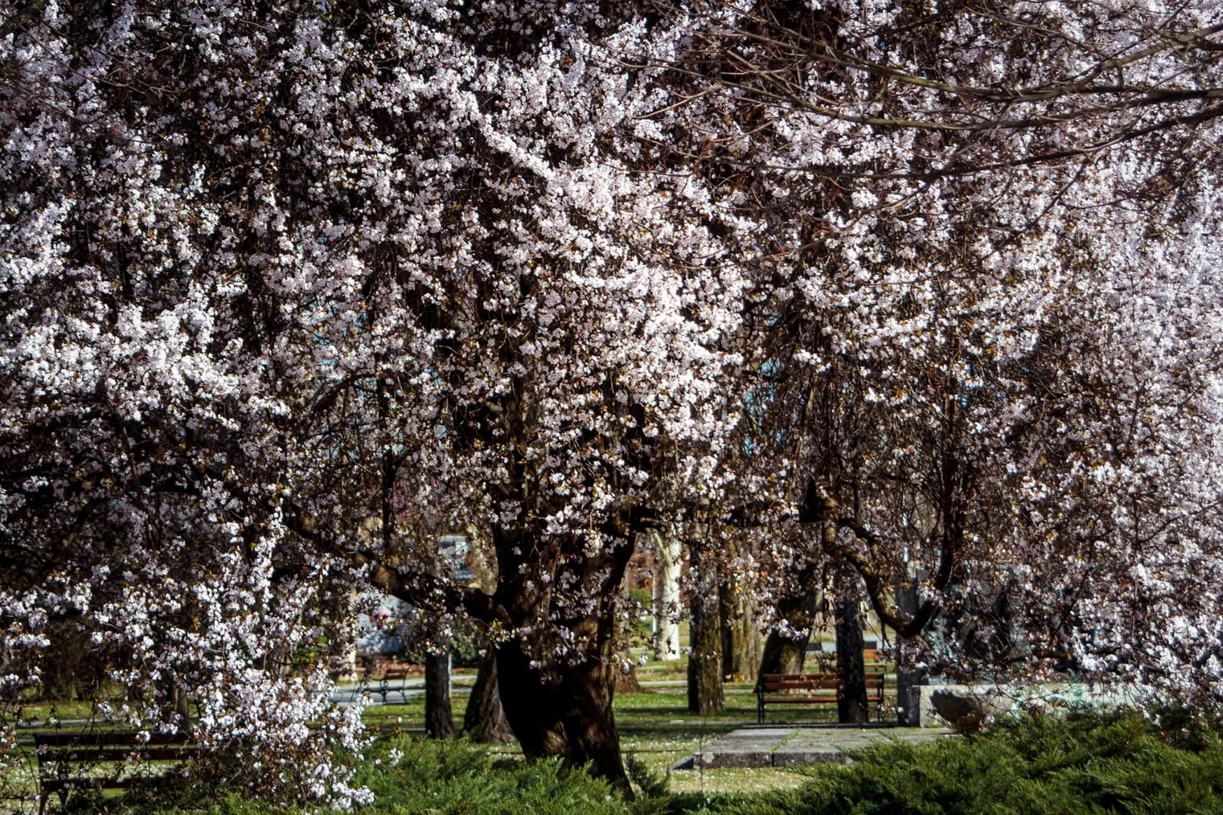 Sisak u proljeće