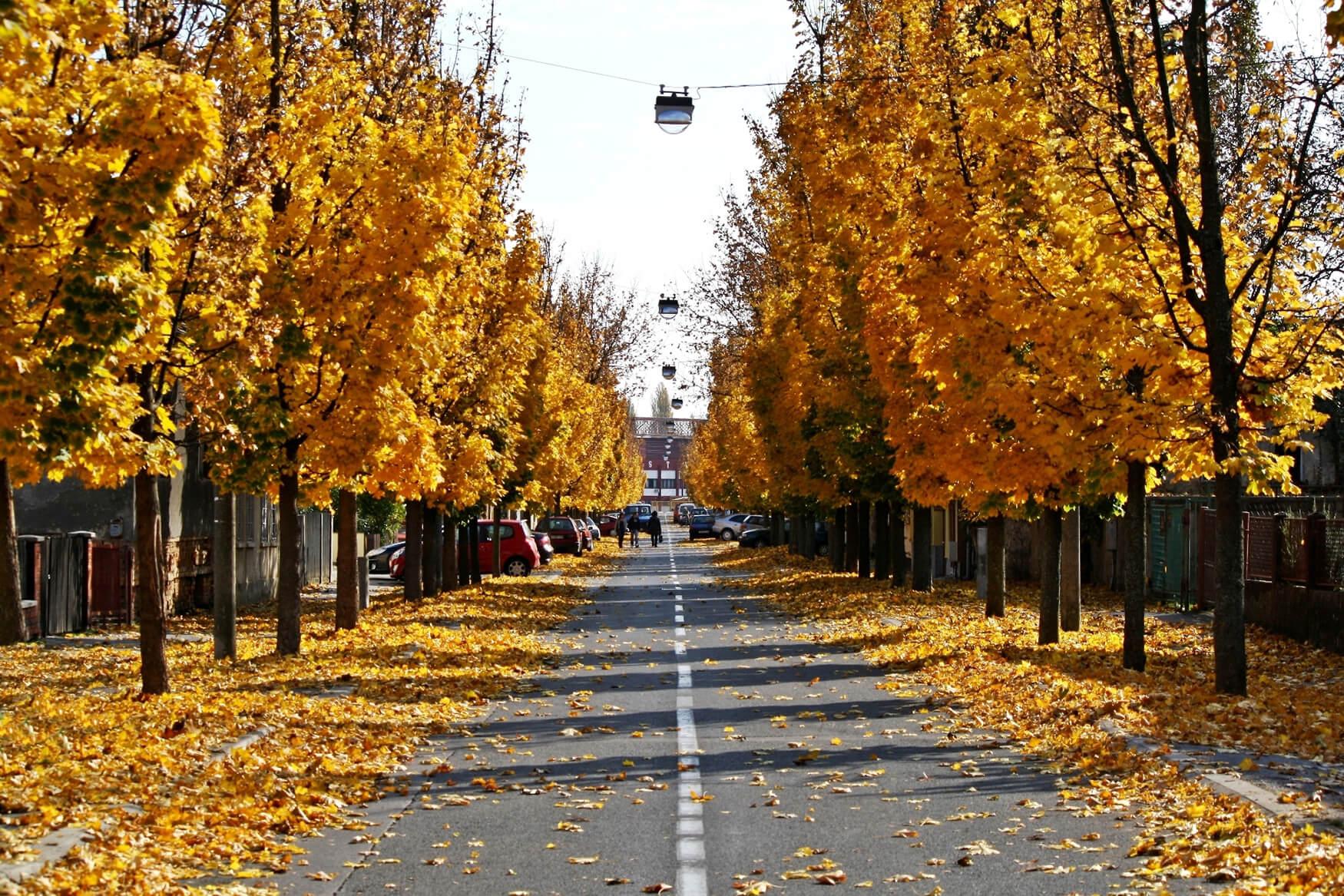 Sisak jesen