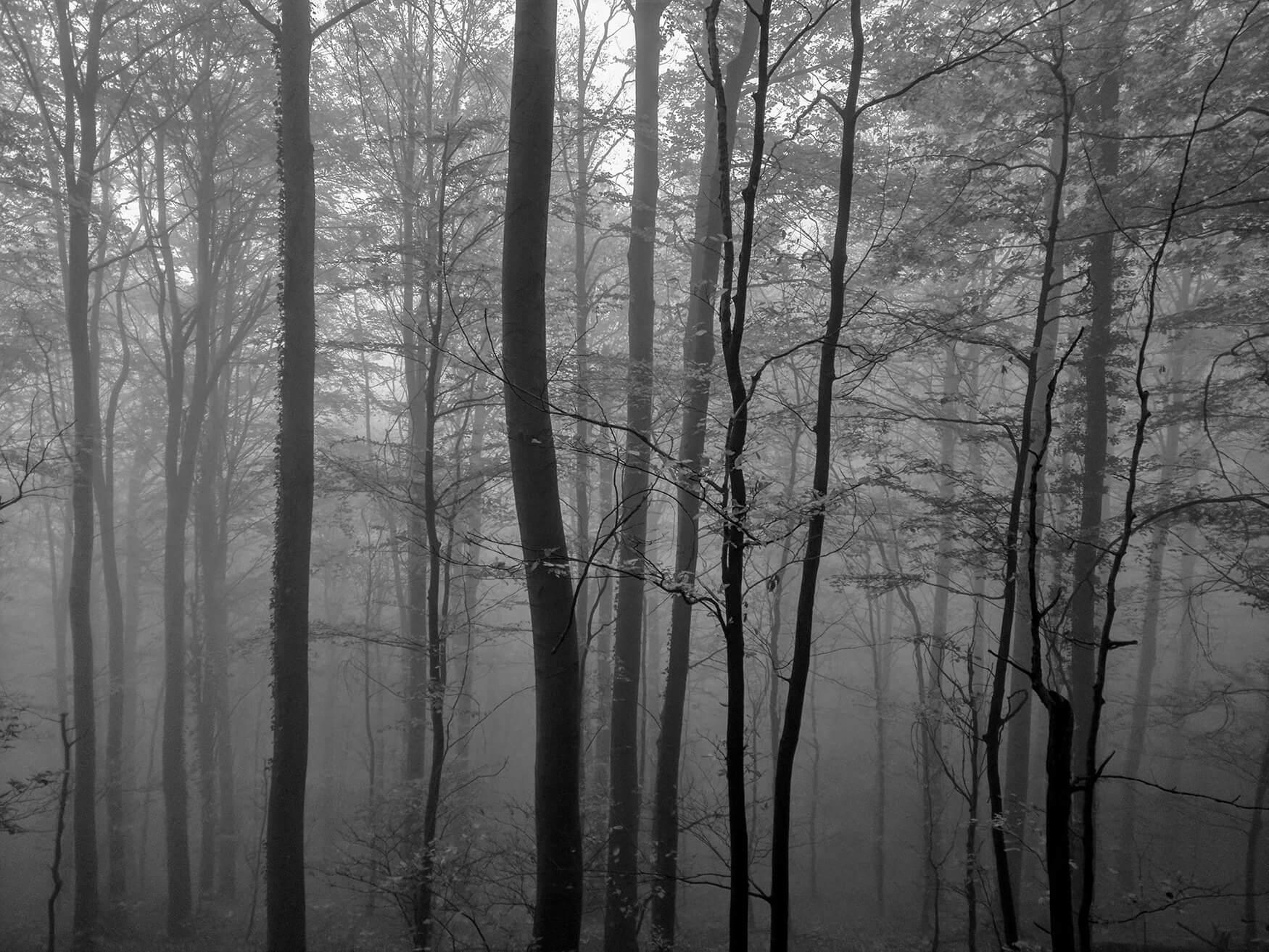 Autor:Petra-Markač-Mystic-morning