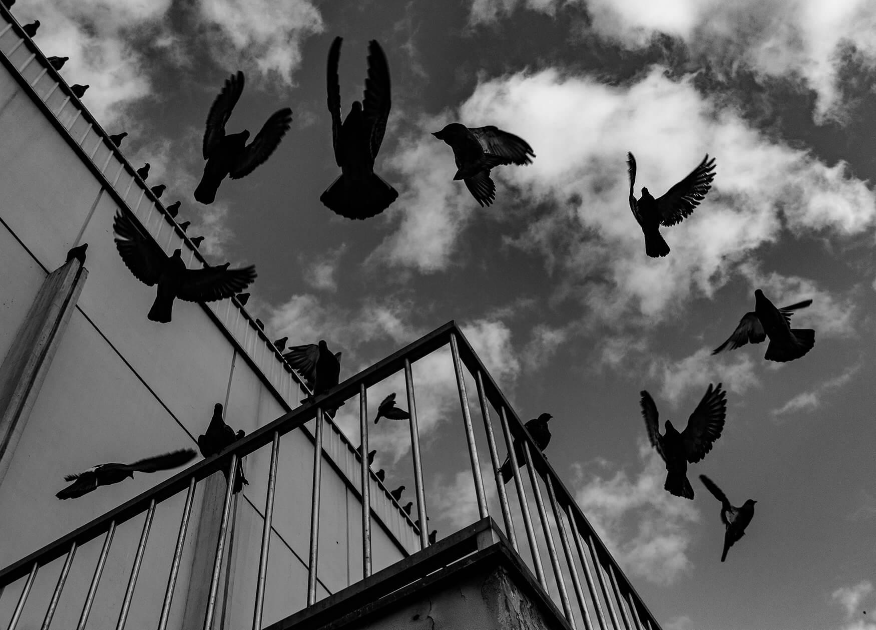 Autor:Stela-Mutavdžija-Ptice