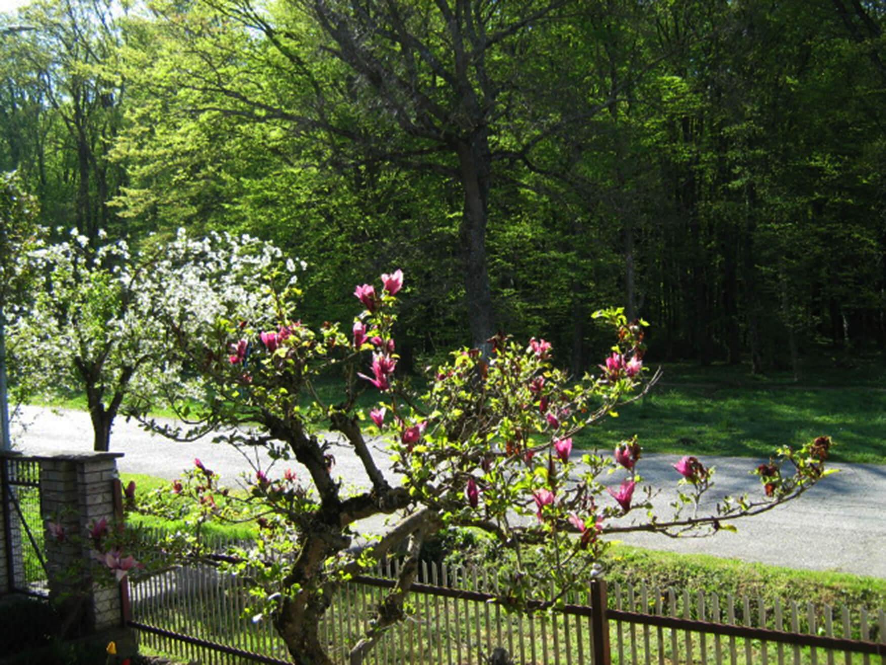 Bojan_Rekić_magnolija