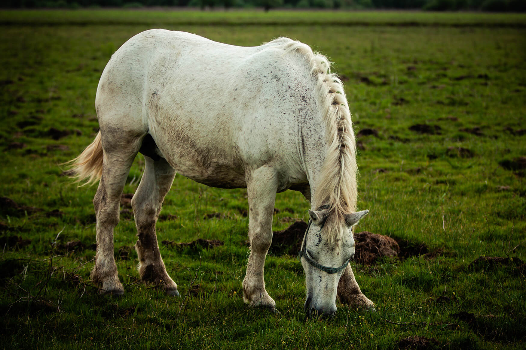 Damir_Pahić_Mužilovčica_Horse