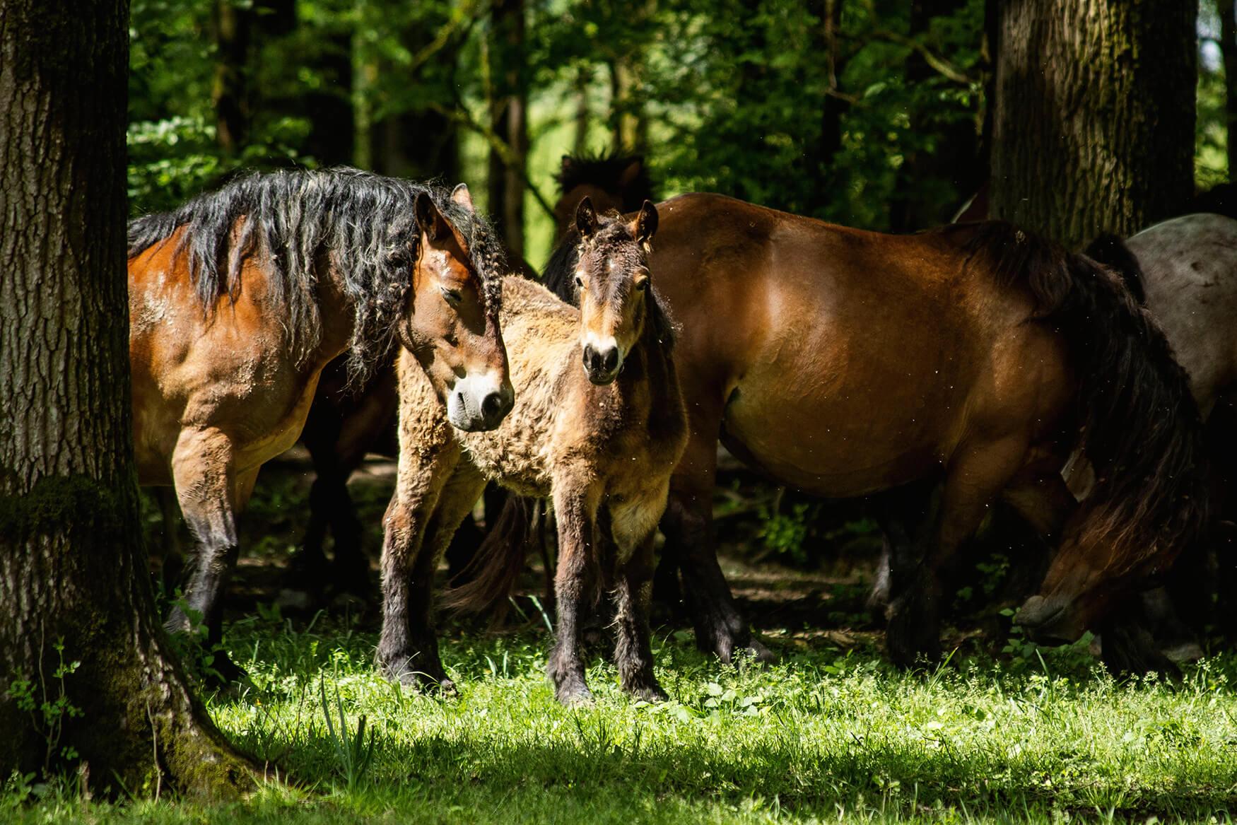 Kristina_Matijaš_Mužilovčica_Horses