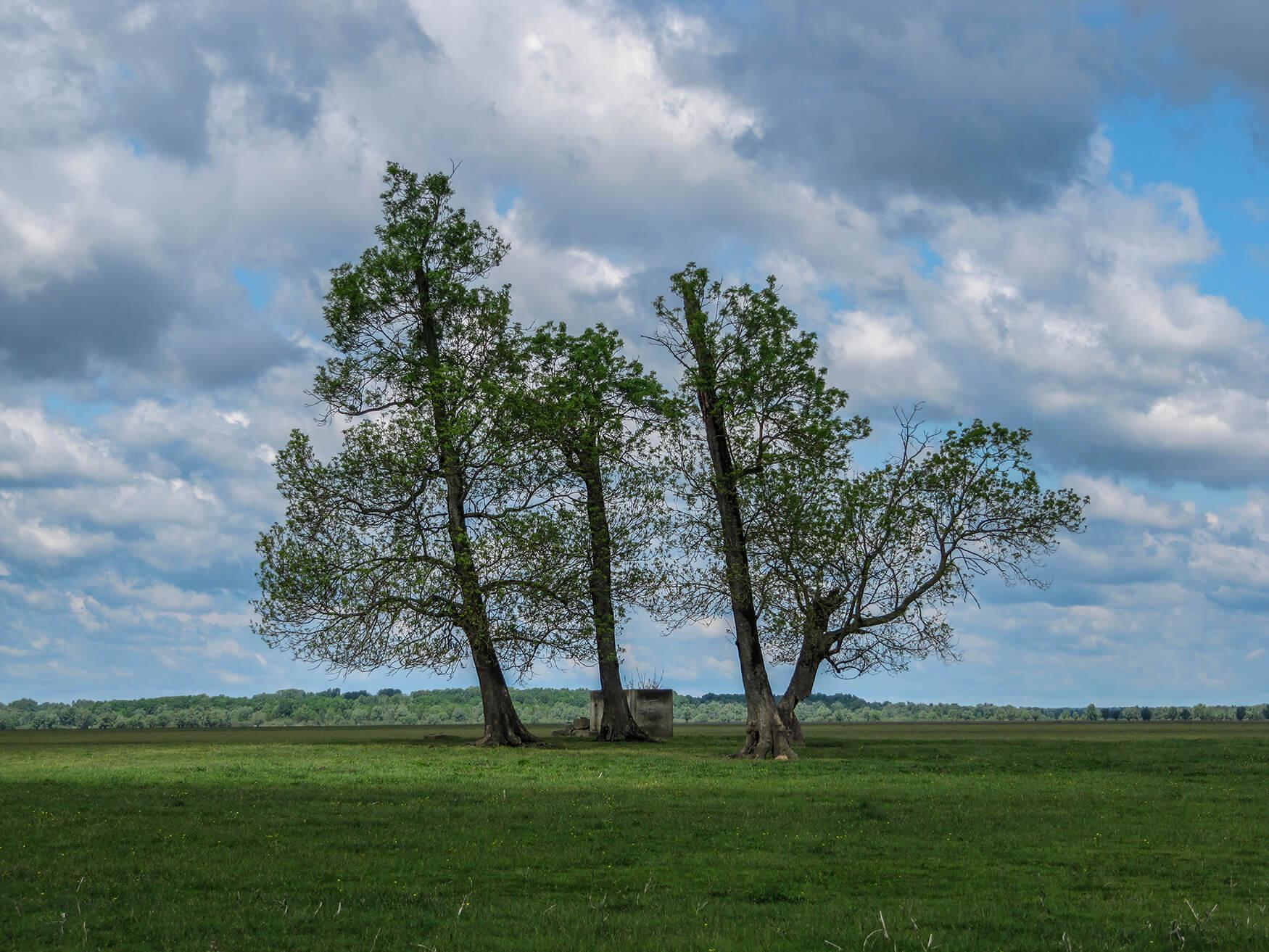Maja_Hodak_Mužilovčica_tree