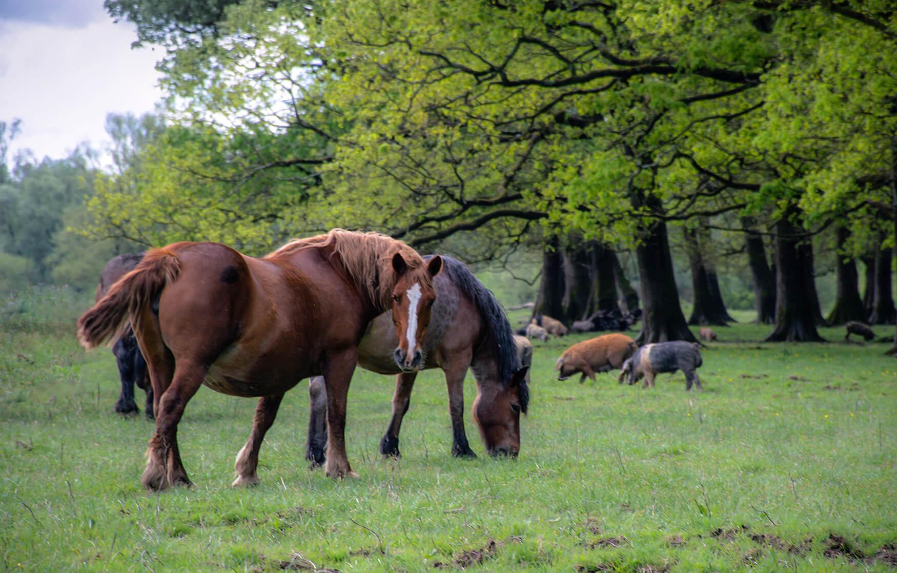 Nada_Graberski_Mužilovčica_horses